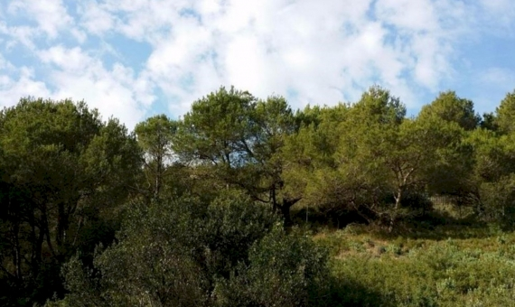Plot with sea-view in Begur | 1