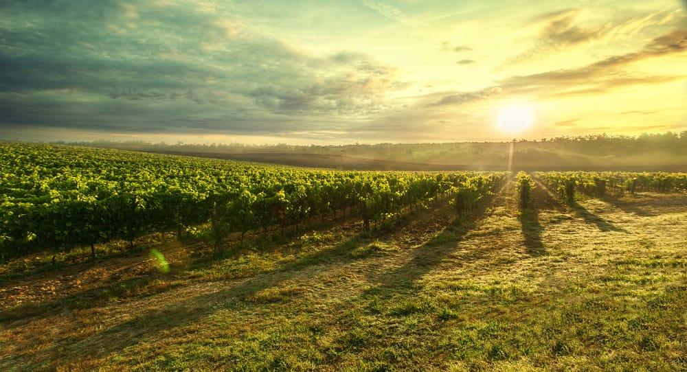 Los viñedos de Cataluña