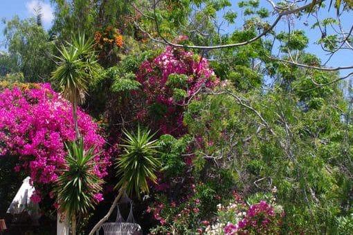 Вилла в Арона,  Чайофа, 450 м2, сад, террасса   | 101328-510x340-jpg