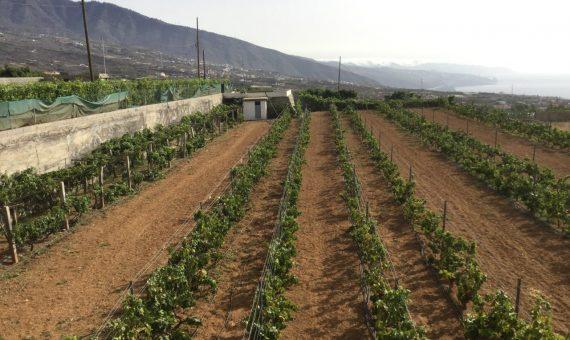 Villa in Güímar, 273 m2, garden, terrace   | 118600-570x340-jpg