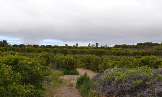 Terrain in Vilaflor,  m2   | 4