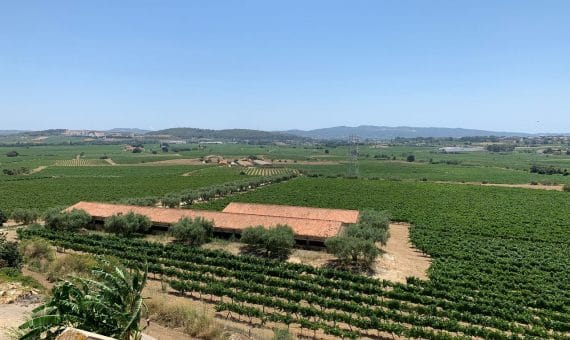 Country estate of 30 ha with vineyard in Penedes, Barcelona | 4