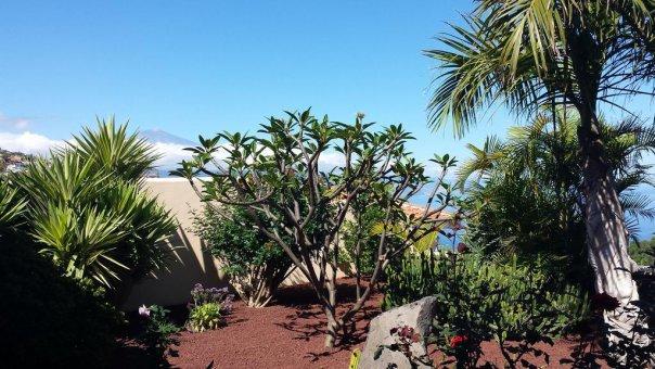 Вилла в Эль-Саусаль, 135 м2, сад, террасса, балкон, гараж   | 26